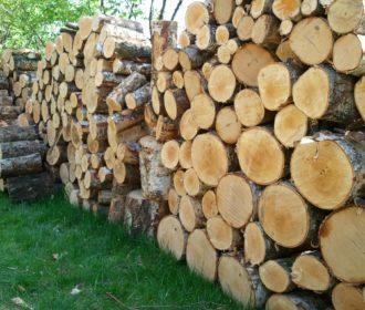 HolzGrassBirke