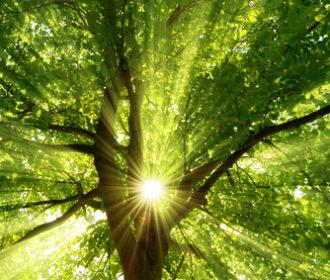 Biomassenutzung, Energiewende